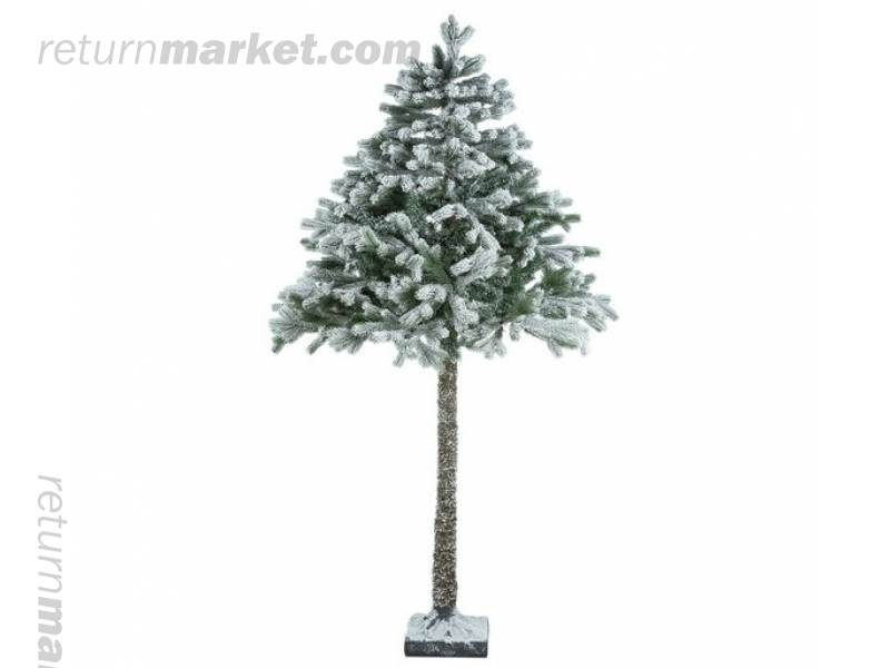 Christmas Trees! Sa20919